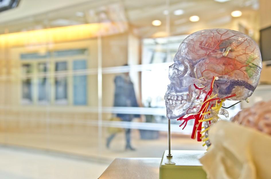 Lidské tělo, zdraví a věda